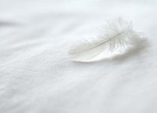 pictures of feathers