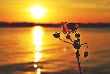 flower sunset nature nikon evening