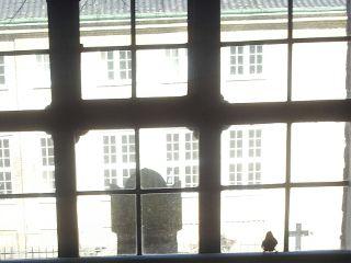 bird church window spring inside incident