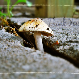 nature photography quotes & sayings photostory emotions