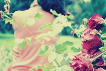 roses nikon blur summer portrait
