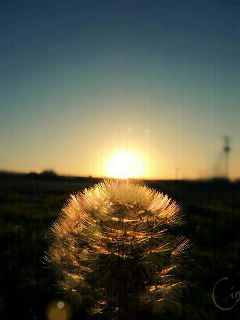 photography nature sun crossprocess winter