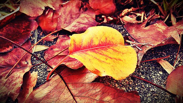 images of autumn