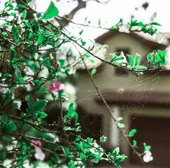 nikon nature bokeh spring flowers
